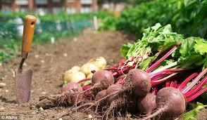 private-garden-beetroot